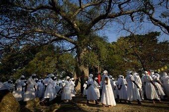 haitian_mapou_tree.jpg