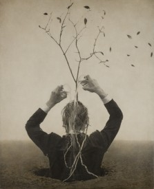 my-sweet-tree-by-robert-and-shana-parkeharrison