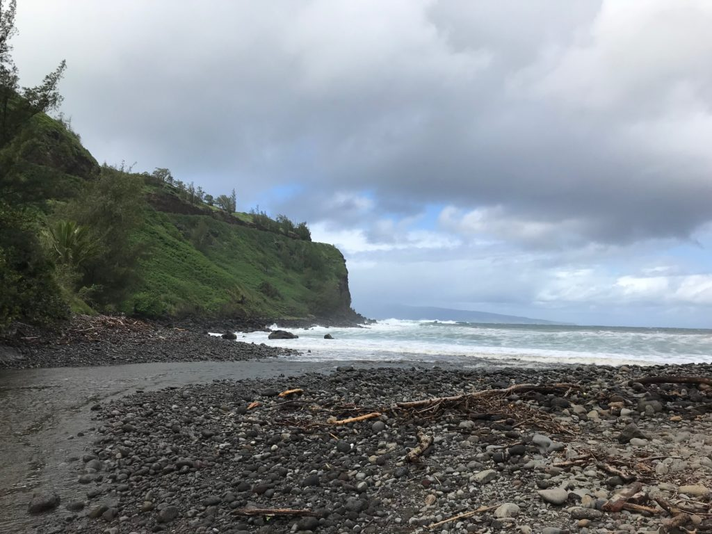 Thanksgiving Break Phenology Site - Honokohau Bay in Maui, Hawaii