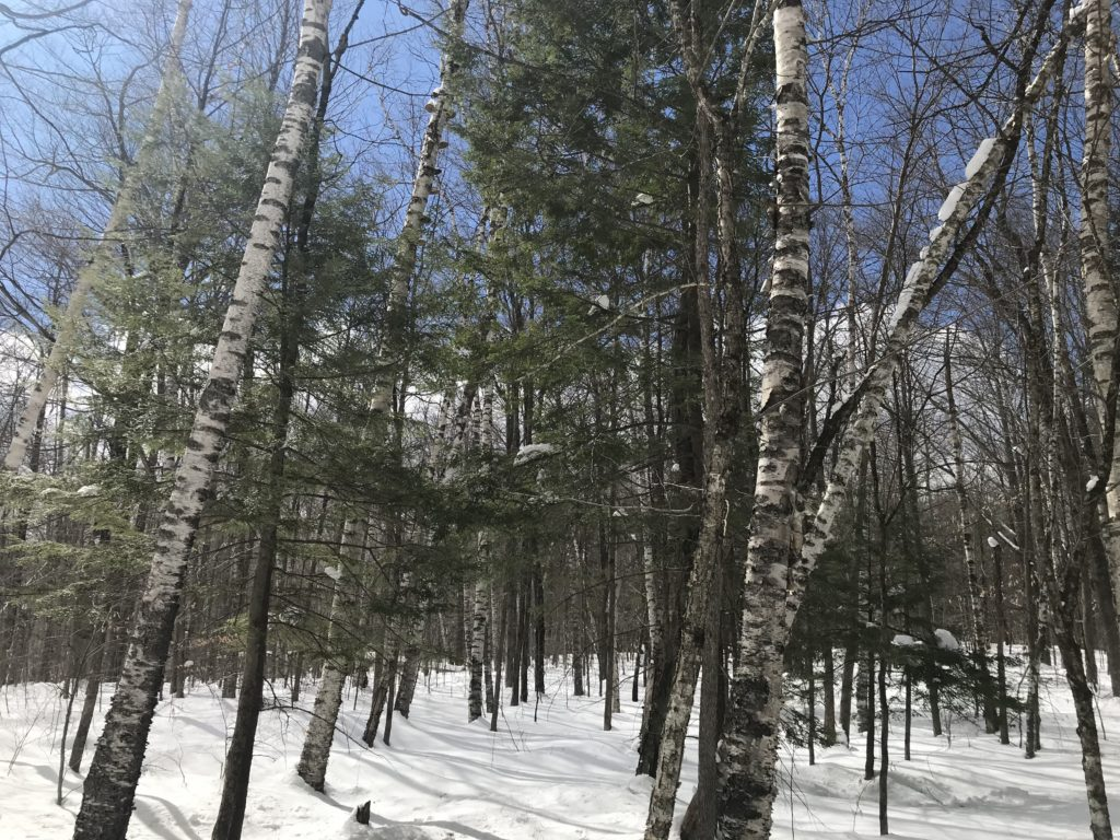 Spring Break Phenology Site - Weathersfield, Vermont
