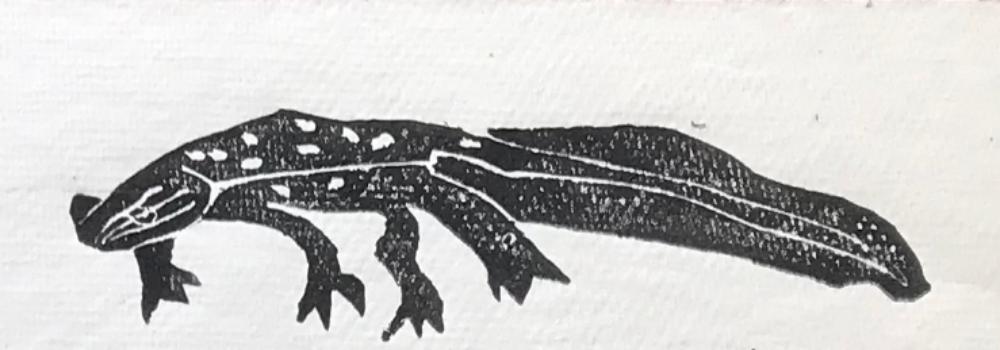 UVM Field Herpetology