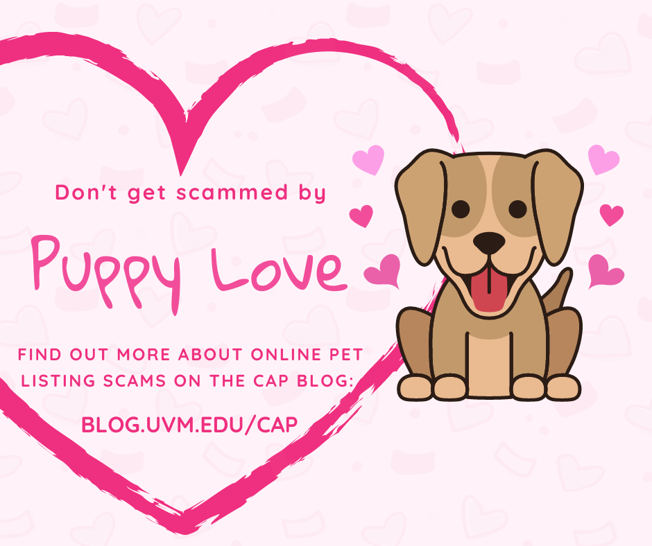 Puppy Love image warns: Don't get scammed by Puppy Love. Find out more about online pet listing scams on the CAP blog: blog.uvm.edu/cap