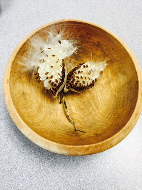 Milkweed in a bowl