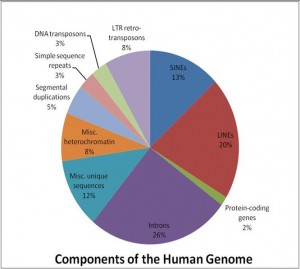 Components_of_the_Human_Genome