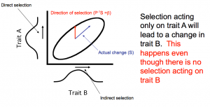 indirect selection
