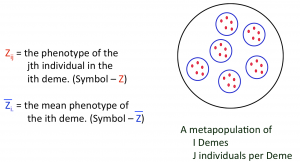 Metapopulation structure