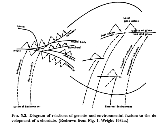 Sewall Wrights Seven Generalizations About Populations Evolution
