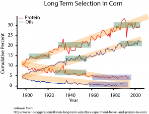 Corn Selection copy