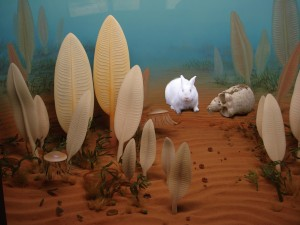 precambrian-rabbit-copy