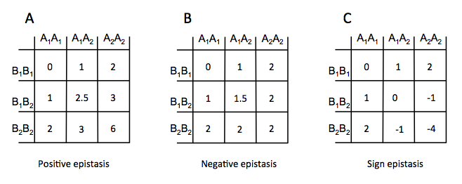 Epistasis in Monkey Flowers, and some general thoughts on epistasis