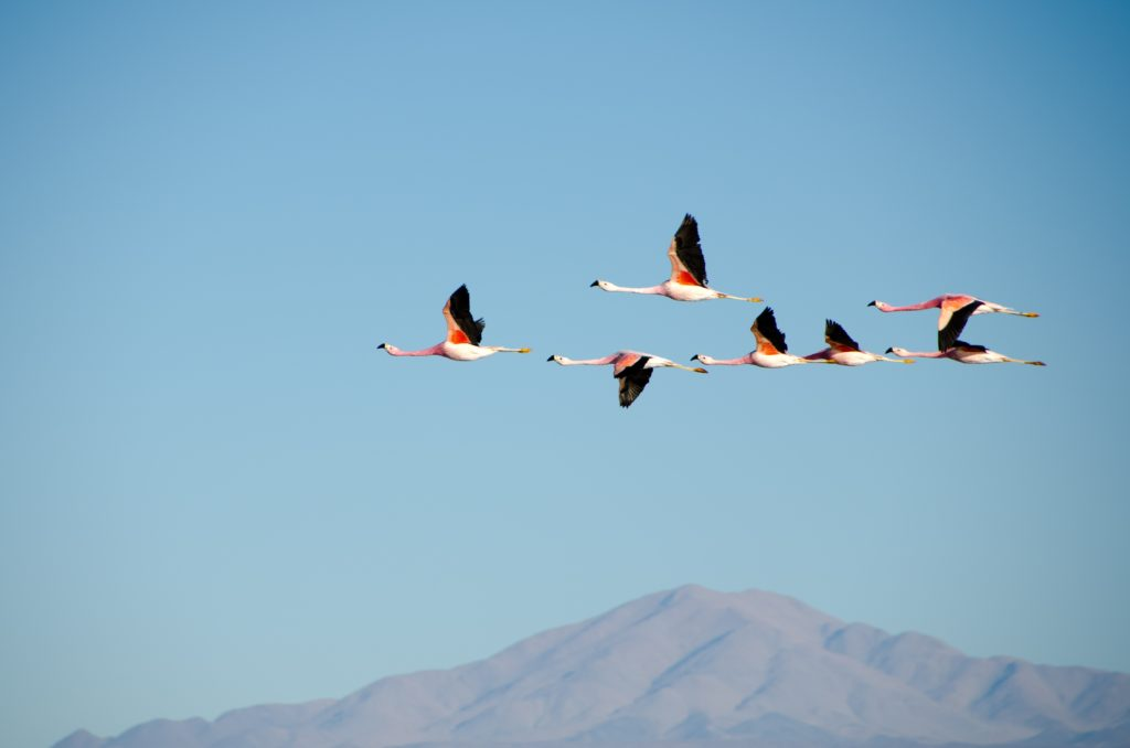 Geese flying in formation with mountain top beneath