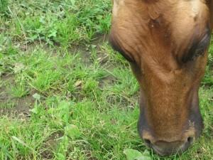 Low Density Pasture