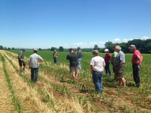 Farmers and UVM Ext. Professionals discussing new no-till corn at an early summer crop patrol.