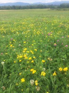 diverse-perennial-pasture