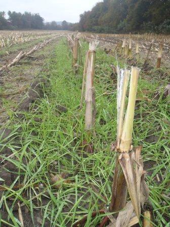 In the Press:  UVM tests aerial planting of cover crops