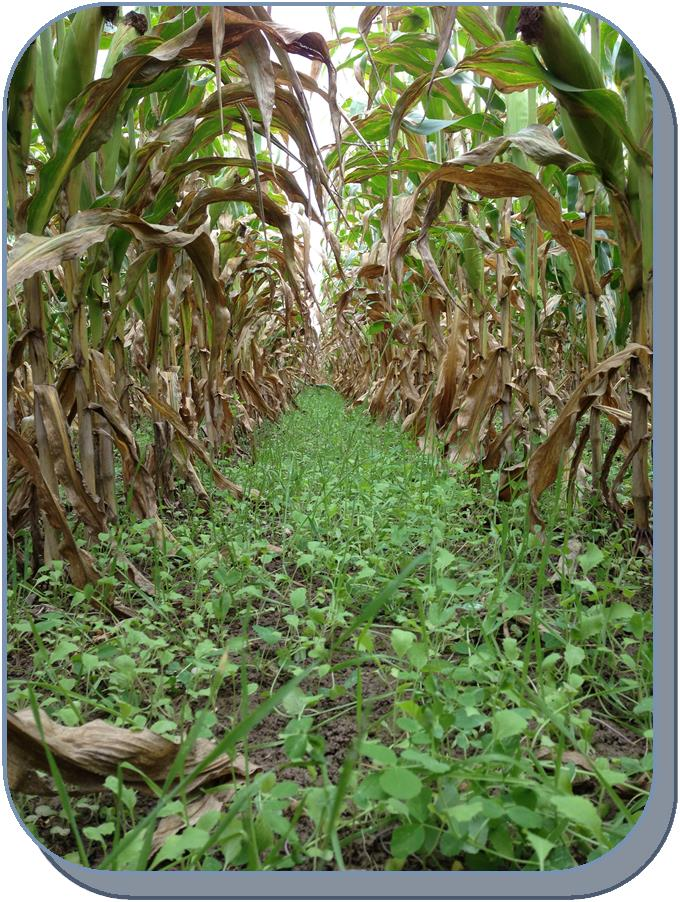 Two Great Upcoming Events...Pastures & Cover Crops