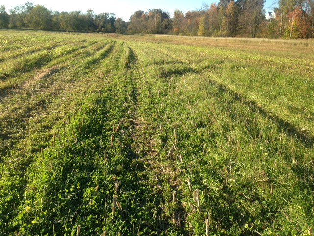 COVER CROP FIELD DAYS...Don't Miss This!