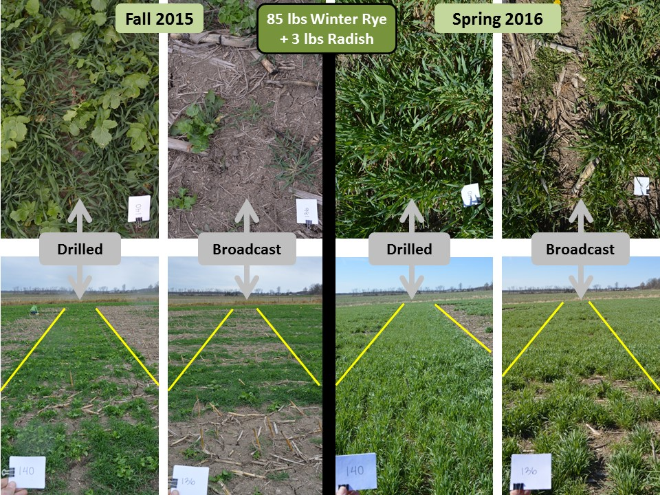 COVER CROPS: FROM RESEARCH TO REALITY