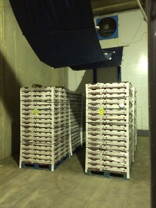Forced air cooling of pallets in a walk-in cooler. The curtain above is lowered to force cool air through the product stacked on the pallet.