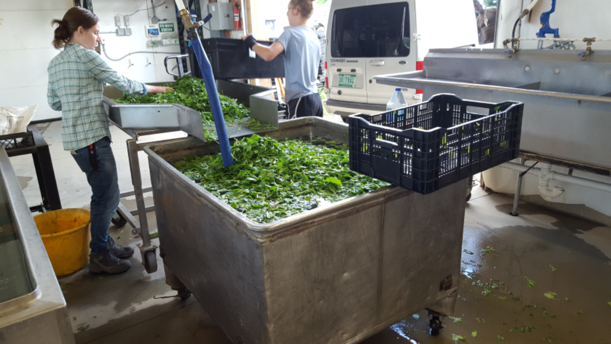 Greens Spinners For Farm Use Uvm