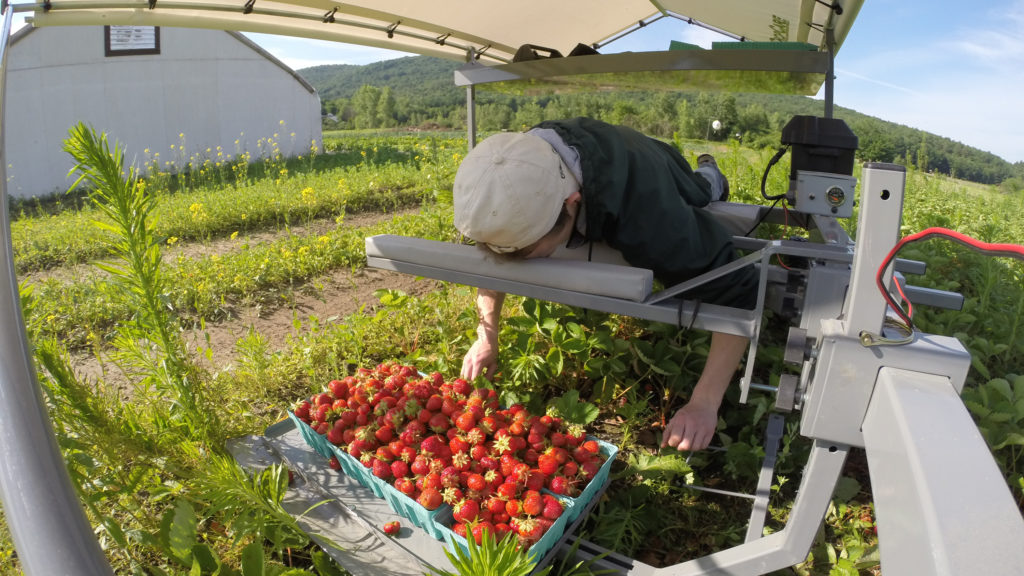 A Better Way to Pick Strawberries