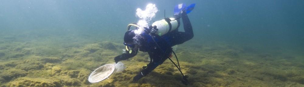 Artificial Reefs in Lake Huron