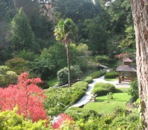 Japanese Garden at Powerscourt, Sept 2013
