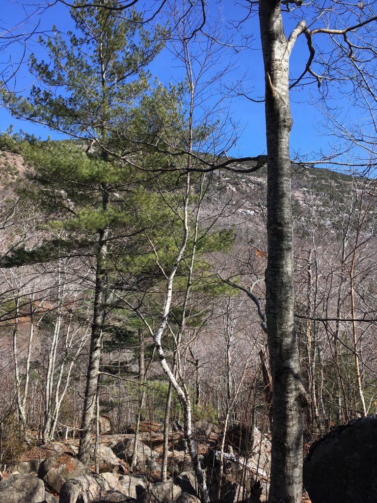 Acadia Hike For Spring Break in Maine