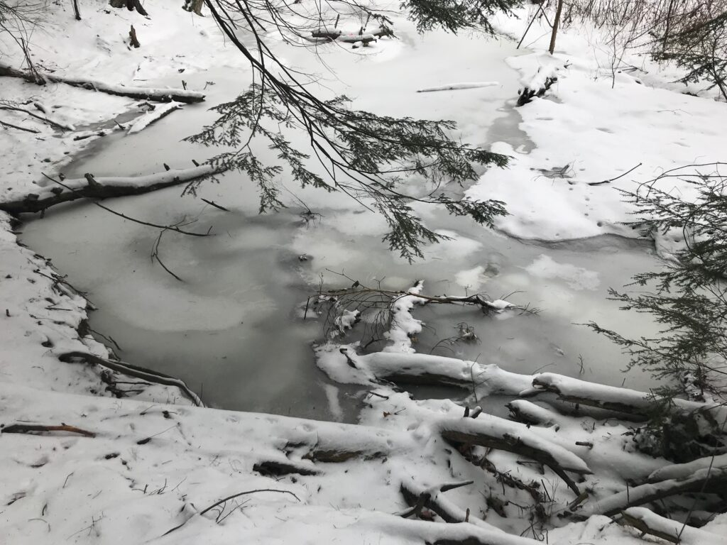 Frozen January