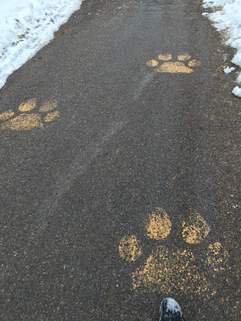 Tracking the Catamount