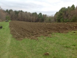 Plowing the new farm, Tamarack Hollow Farm, Plainsfield, May 9, 2014