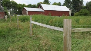 Barnyard and fencing at Pine Island Farm, Summer 2015