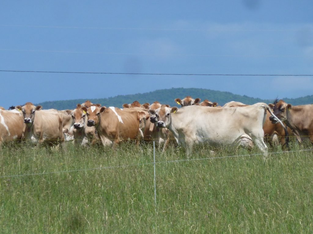 Adapting Farm Management to a Changing Climate - Butterworks Farm, Vermont
