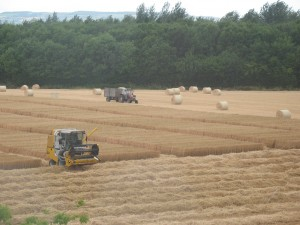 Winter barley harvest begins, Teagasc Oak Park, Ireland