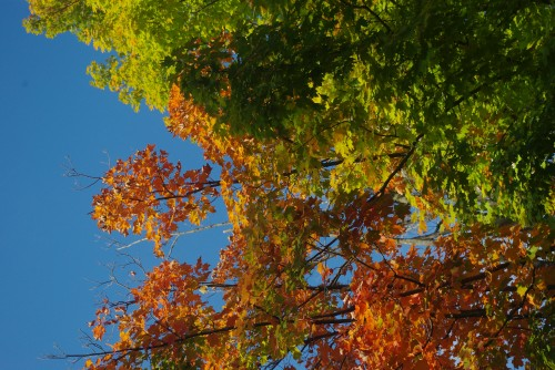 The changing leaves in Shelburne, VT