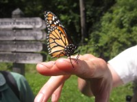 Making friends with a Monarch at Lone Rock Point in Burlington