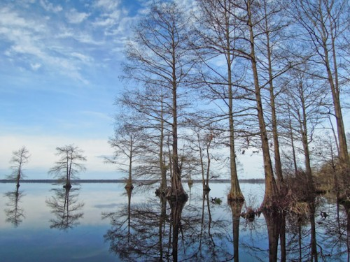 Lake Drummond, at the center of the Great Dismal Swamp in southeastern Virginia. Photo by Jessie Griffen