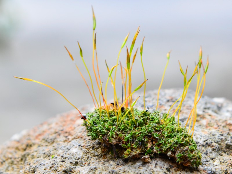 The Noble Sporophyte  U2013 Ecoblog