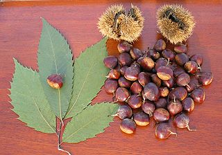 Roasting (and Restoring) Chestnuts