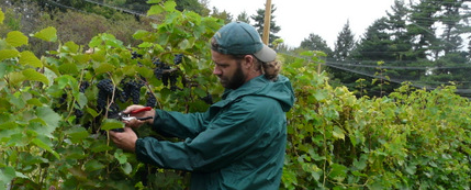 Summer 2017 Cold Climate Viticulture Class at UVM