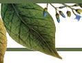 Omeka icon
