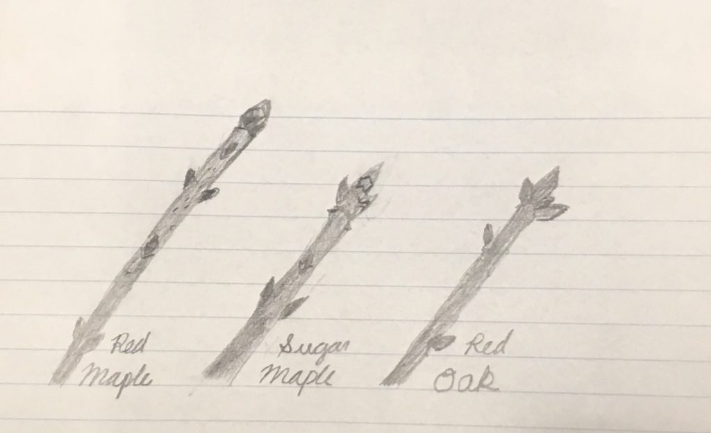Twig Sketches