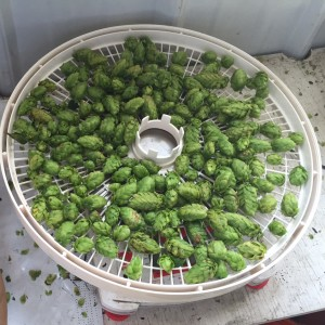 Getting ready to pop some hops in the dehydrator.