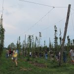 Folks tour the hopyard at past annual field day.