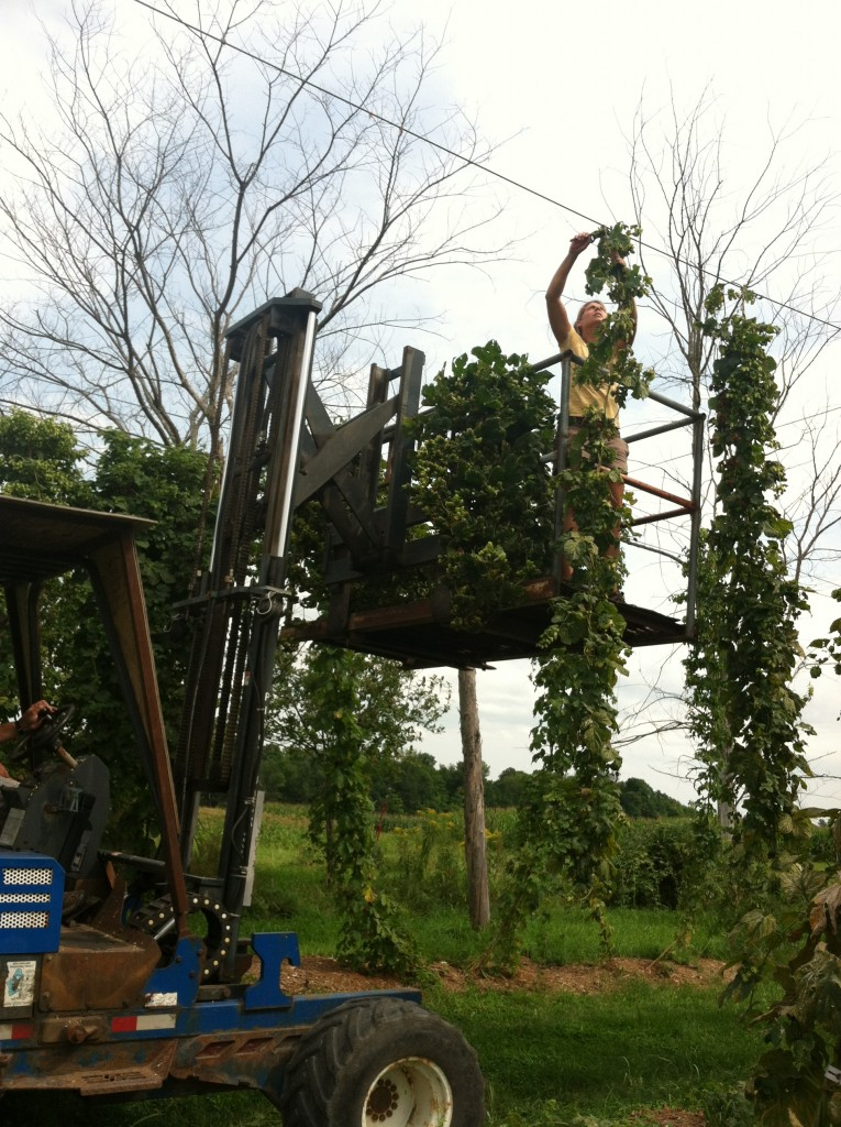 Hop Harvesting Field Day, September 11, 2015