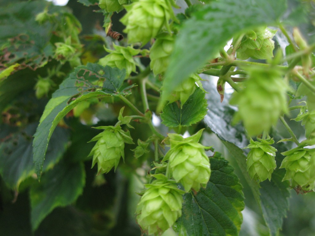 Don't miss out on attending our Vermont Annual Hop Conference!