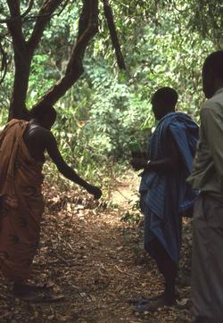 Conservation in Sierra Leone