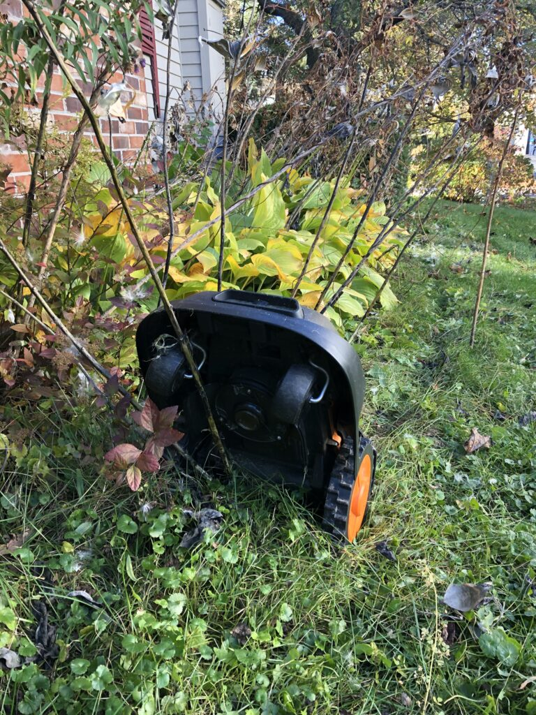Robotic mower hung up on a large milkweed plant