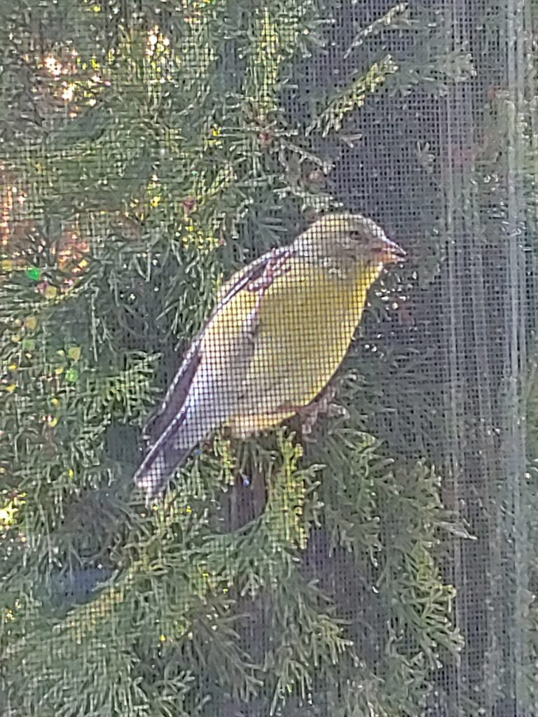 Photo of a bird through a window screen.