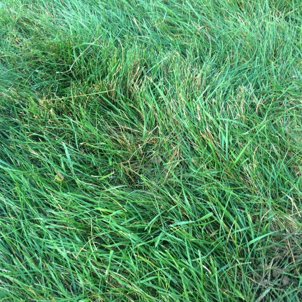 Grass where the triangular soil sample was replaced.